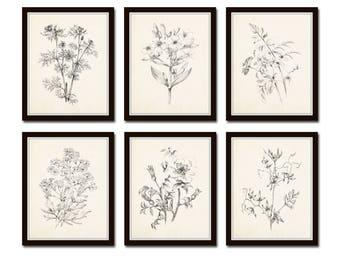 Vintage Botanical Sketch Prints Set No. 1, Botanical Prints, Giclee, Art Print, Vintage  Botanicals, Illustration, Flower Prints, Flower Art