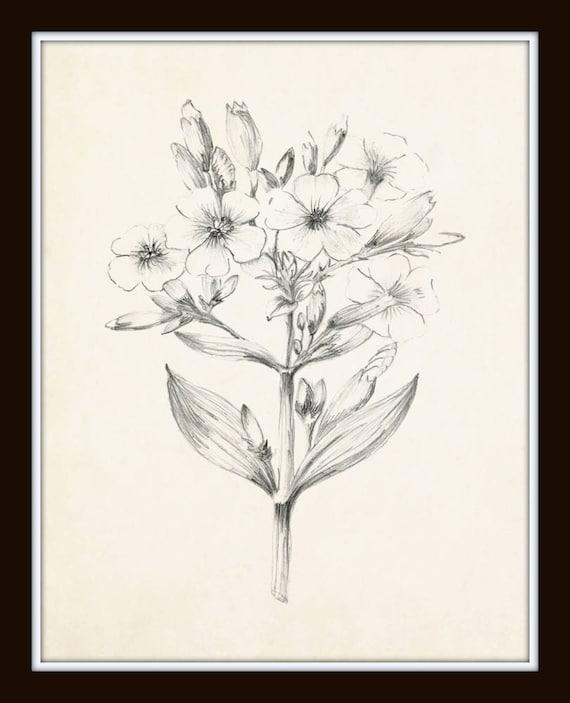 Vintage Botanicals Flower Prints Flower Art Art Print Botanical Prints Illustration Vintage Botanical Sketch Prints Set