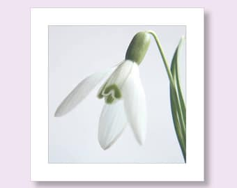 Flower Birthday Photo Card, Snowdrop Card, Flower Notecard, Floral Birthday Card, White Birthday Card, Note Cards