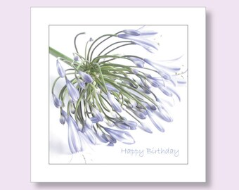 Birthday Cards for Her | Female Birthday Card | Floral Birthday Card | Agapanthus Card | Flower Card for Her | Photographic Card | Cards