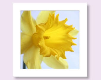 Daffodil Birthday Photo Card, Flower Birthday Card, Floral Card, Photographic Greetings Card, Thank You Card, Flower Notecard, Easter Card