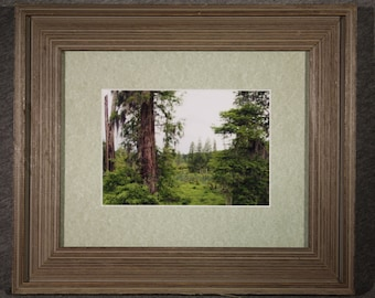 Phinizy Swamp in Green - 5x7 matted and framed in an 8x10 Barnwood Frame, Nature Photography, Landscapes, Free Shipping