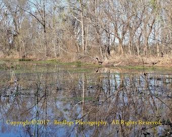 Swamp Shine - Augusta, GA