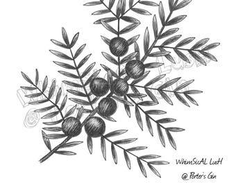 Juniper: Porter's Gin Limited Edition Print