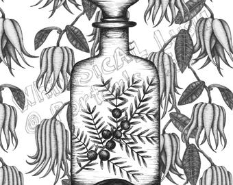 Vintage Bottle with Juiper on Buddah's Hand Wallpaper: Porter's Gin Limited Edition Print