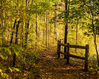 Fall View of Boardman River Trail