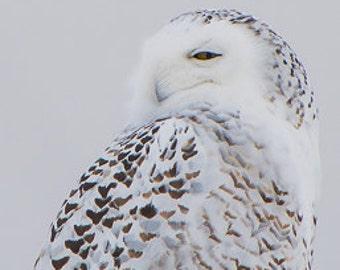 Snowy Owl Peeking at Me