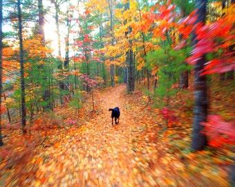 Color Runs Photo