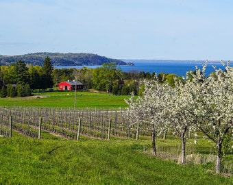 Cherry Blossom Hillside Old Mission Peninsula