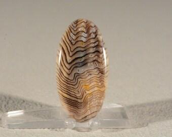 Ring Cabochon Hells Canyon Herringbone Petrified Wood. Handcrafted USA. Natural Gemstone.