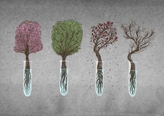 A Bonsai For All Seasons- nature science art print by Jon Turner- A4 A3 8x10