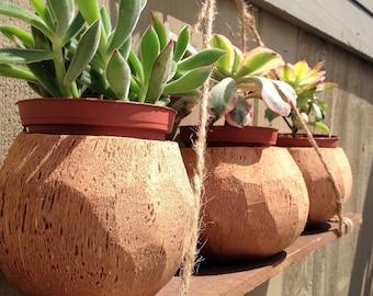 100 % noix de coco sculptés à la main naturelle planteurs /Holders
