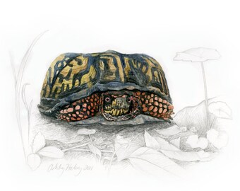 eastern box turtle etsy