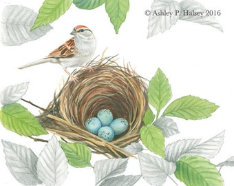 Chipping Sparrow Watercolor Print
