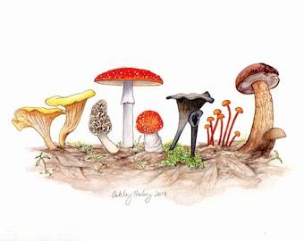 Eastern Mushroom Print