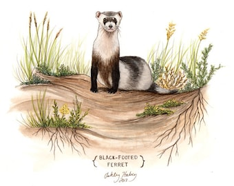Black-footed Ferret Painting