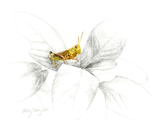 Grasshopper Watercolor and Pencil Print