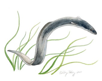 American Eel Watercolor Print