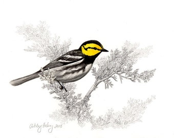 Golden-cheeked Warbler Print
