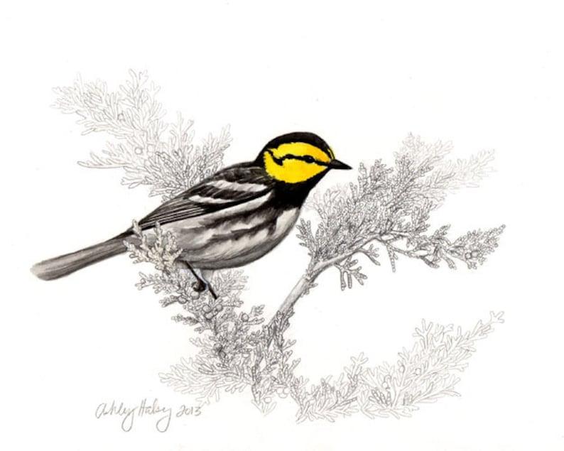 Golden-cheeked Warbler Print image 0