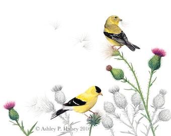 American Goldfinch Watercolor Print