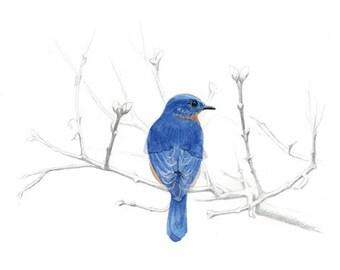 Watercolor Bluebird Print