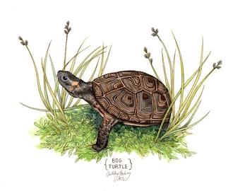 Bog Turtle Print