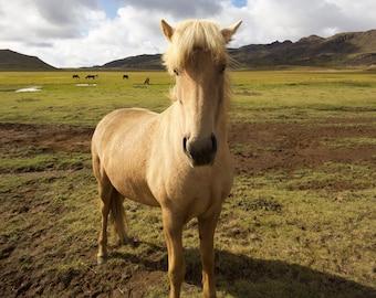 Icelandic Horse photo, Iceland horse print, Iceland Print, Iceland landscape, Iceland horse canvas, Iceland Art