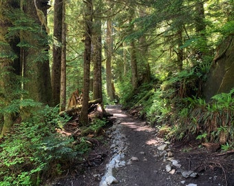 Pacific Northwest Hiking Trail photo, pacific northwest canvas, square seattle photo, hiking art, pacific northwest art, hiking photo