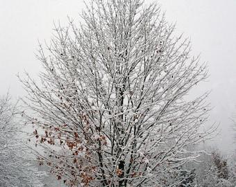 Snow Covered Tree Photo Canvas, Snowy Tree Print, Michigan Photography, Winter Photo, Winter Print, Winter Canvas, Snow Tree Canvas