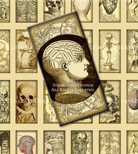 Antique Anatomy Victorian Goth Steampunk 1x2 Inch Domino Etsy