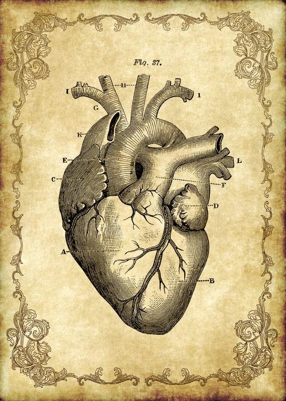 5x7 Victorian Goth Steampunk Antique Anatomy Heart Etsy