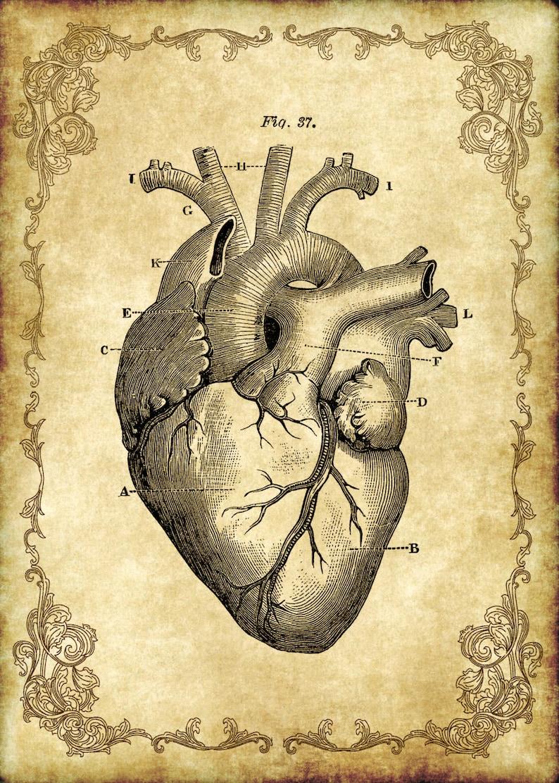 5 X 7 Viktorianischen Goth Steampunk Antik Anatomie Herz Etsy