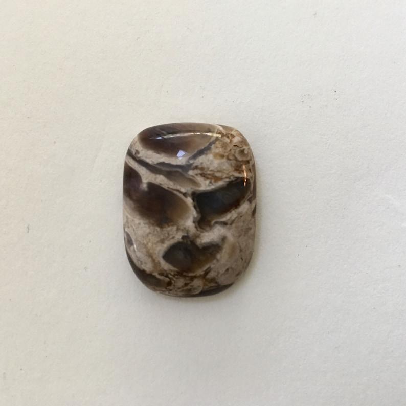 Petrified palmroot. 18x21x6 mm    flawless  325181J image 0