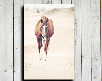 The Visit - Horse art - Horse Decor - Horse photography - Horse canvas - Animal photography