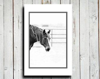 "Horse Face - Horse decor - Canvas 16x24"" - Black and White Horse decor - Horse art - Western art - Equine art - Horse photography"