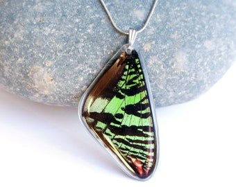 Butterfly Wing  Necklace Silver Ivory Pearl and Silver Chain insect wing jewelry bug accessory dainty layering moth