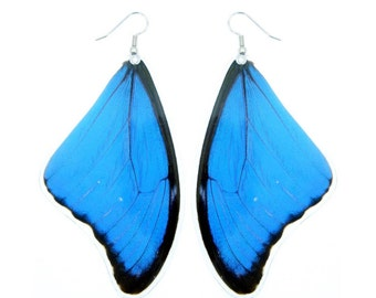 Real Blue Morpho butterfly wing earrings (LARGE SIZE) - Butterfly Wing Jewelry