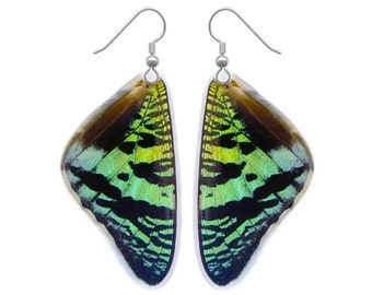 Real Butterfly Wing Earrings - Green Sunset Moth - Butterfly Jewelry, Butterfly Wings, Curiosity, Natural, Oddities Jewelry, Recycled