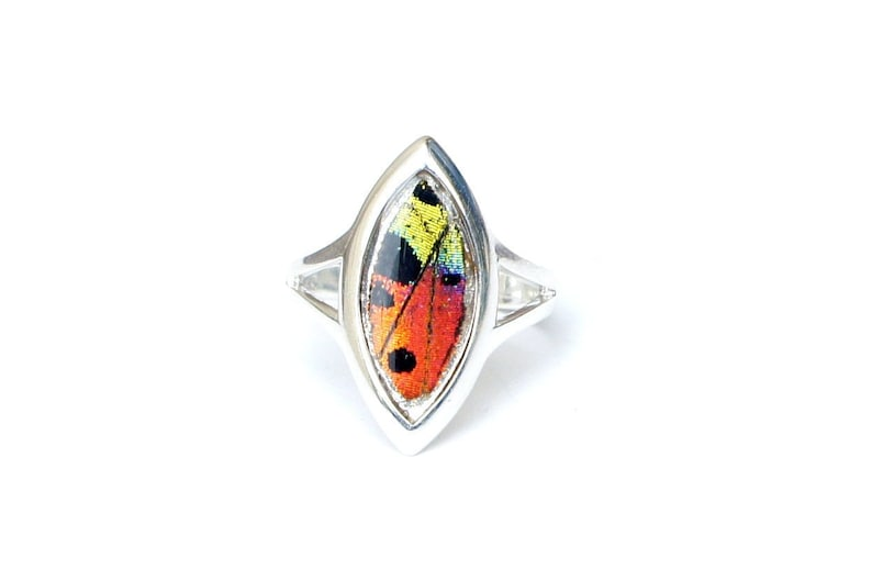 Rainbow Sunset Moth Butterfly Gift Sterling Silver Butterfly Accessory Real Butterfly Wing Ring