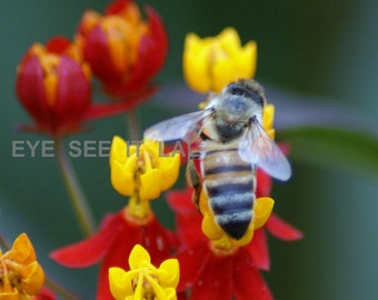 4x6 PRINT red and yellow flowers with  bee