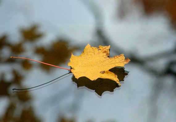 Leaf on Glass