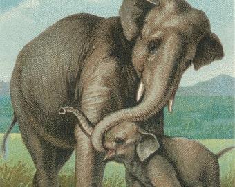 Elephant mother and baby vintage illustration Digital Download