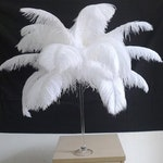 100 White Ostrich Feathers for Wedding centerpieces