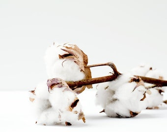 Clean Cotton Fragrance Spray: Phthalate-Free. For Home & Vehicle. Great for Use as a Light Deodorizer While Vacuuming!