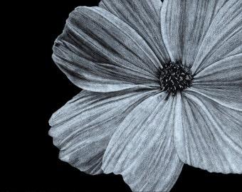 Floral Illustration, Black & White Cosmos, Botanical Drawing