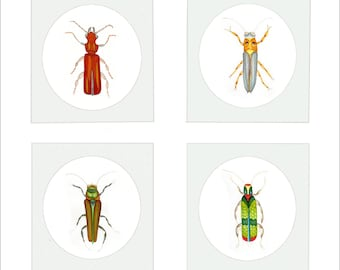 Insect Art Miniatures. Hand Drawn And Hand Painted Miniature Bugs and Critters Printed Onto Archival Artists Watercolour Paper