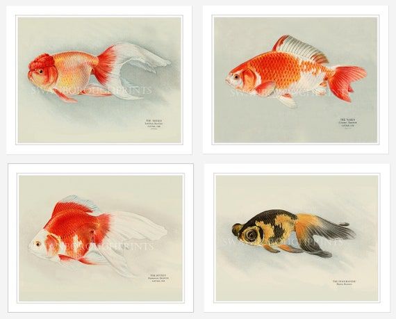 Ryukin Goldfish Wall Art Goldfish Print Japanese Goldfish Print Japanese Koi Carp Print Gift For Husband Game Room Decor Fish Tank Art