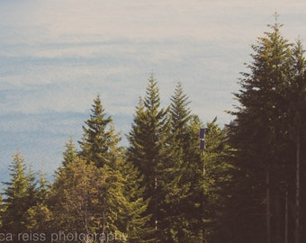 New Zealand Evergreen Trees and Lake Landscape Art Print Photography Green Light Blue Rustic Vintage Nature Home Decor