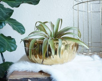 Vintage Swirled Short and Wide Lacquered Brass Planter Pot